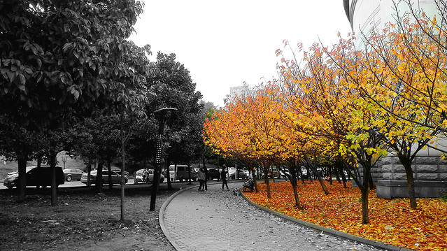 fall-tree-leaf-park-landscape picture material
