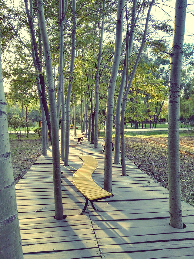 wood-no-person-leaf-nature-tree picture material