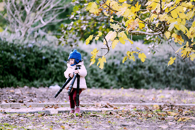 nature-girl-tree-leaf-park picture material