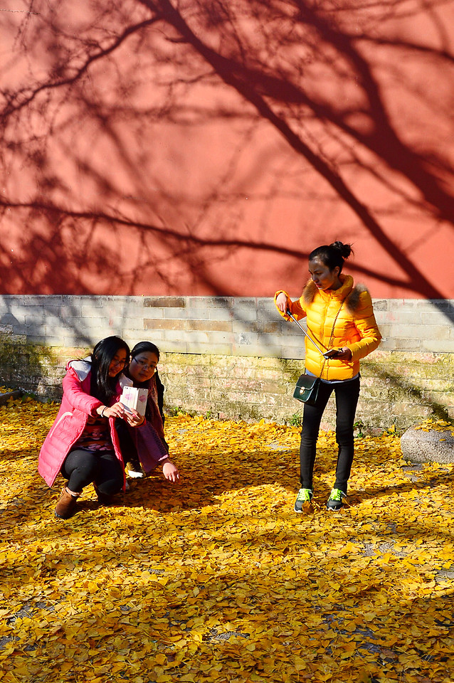 fall-people-adult-girl-yellow picture material