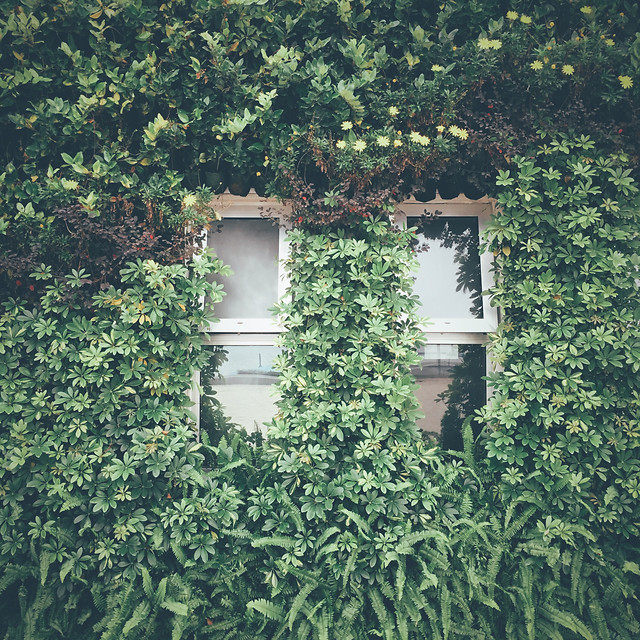 ivy-no-person-house-architecture-vine picture material