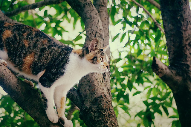 nature-tree-mammal-animal-wood picture material