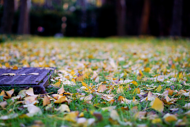 grass-fall-nature-park-leaf picture material
