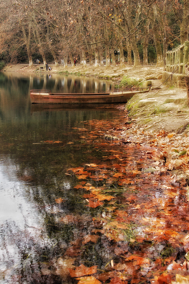 fall-water-wood-leaf-nature picture material