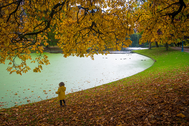 fall-tree-leaf-landscape-park 图片素材