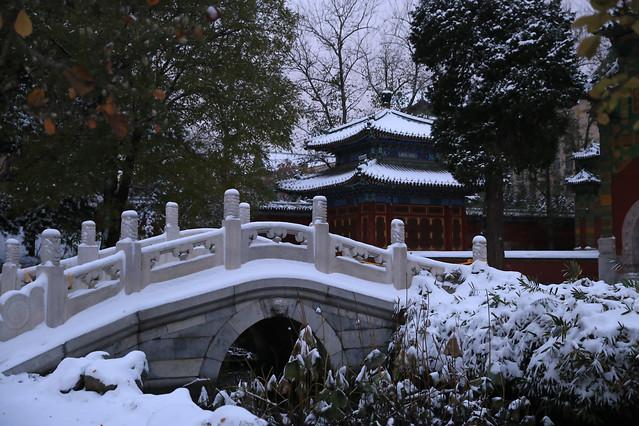 winter-snow-no-person-tree-cold picture material