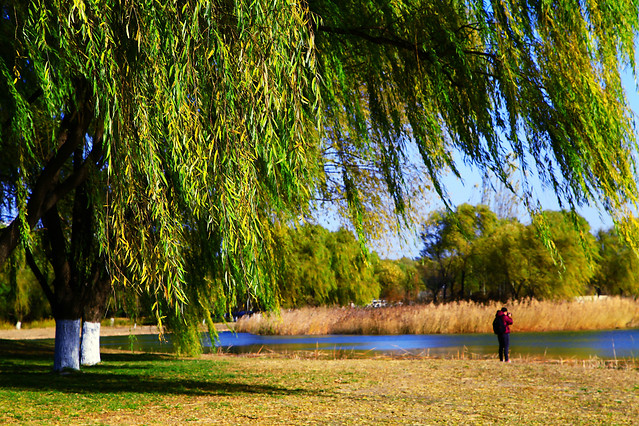 tree-nature-park-water-reflection 图片素材