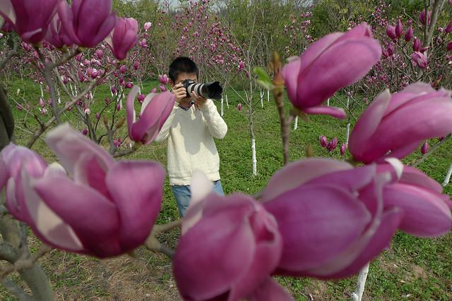 flower-nature-garden-flora-plant 图片素材