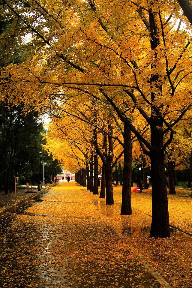 fall-tree-leaf-park-wood 图片素材
