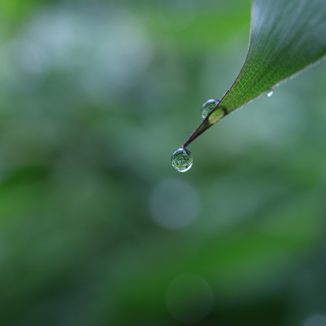 rain-dew-drop-leaf-droplet picture material
