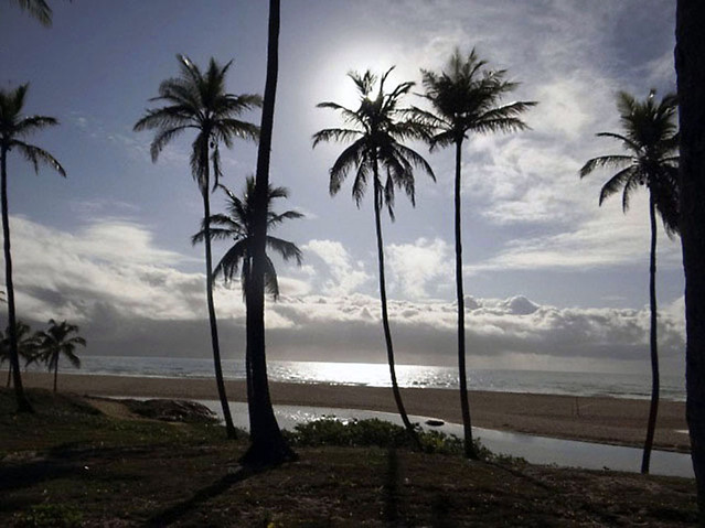 beach-palm-seashore-tropical-sand picture material