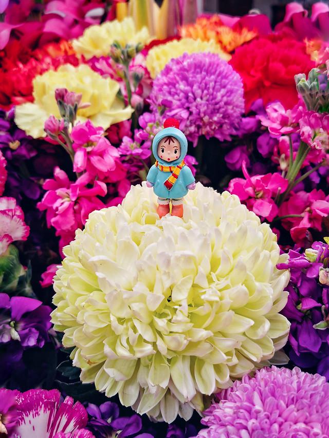 flower-nature-flora-petal-no-person picture material