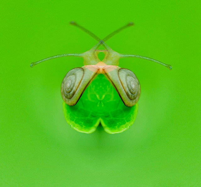 insect-invertebrate-pest-nature-antenna picture material