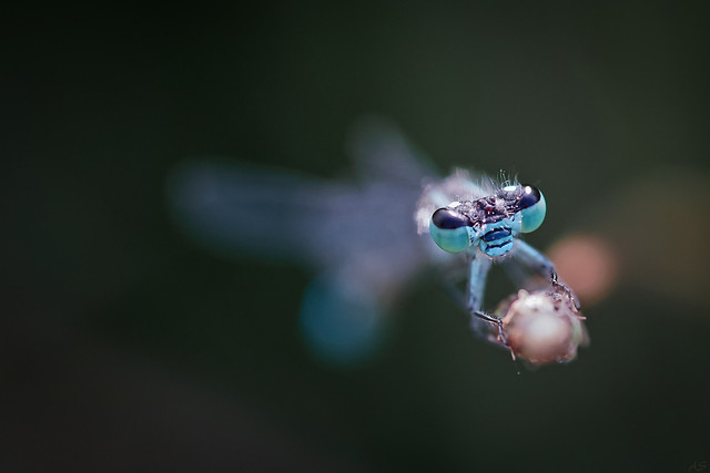 insect-dragonfly-no-person-nature-wildlife 图片素材