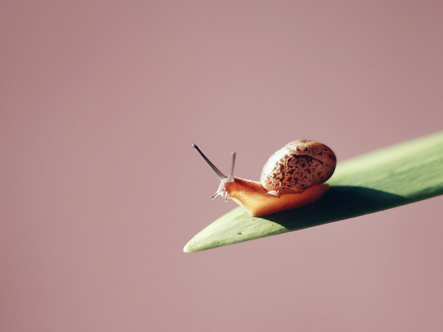 no-person-insect-invertebrate-snail-nature picture material
