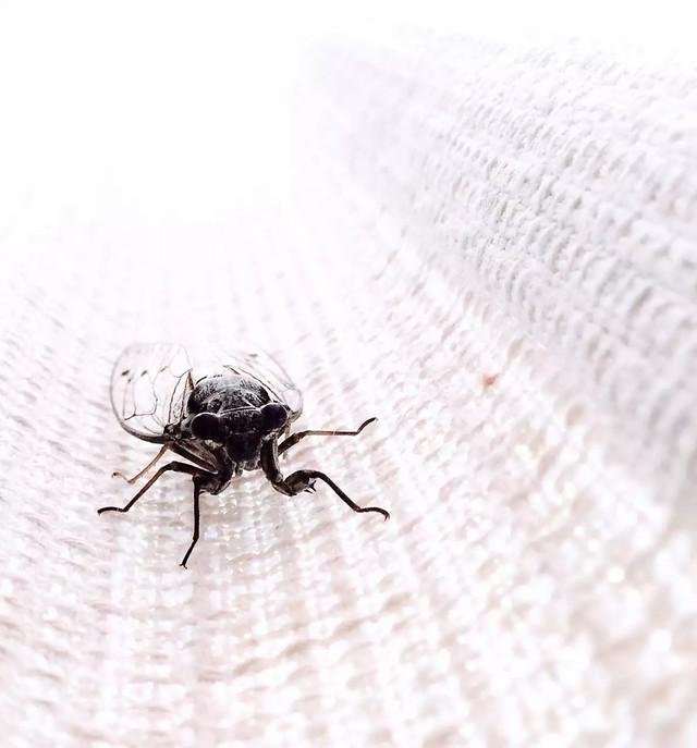 insect-spider-invertebrate-arachnid-pest picture material