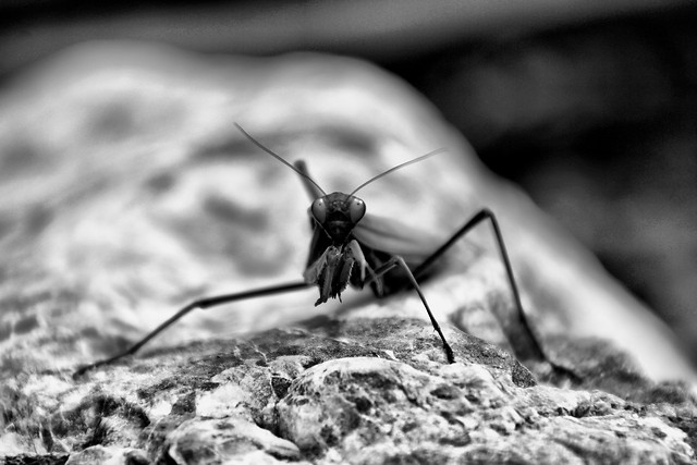 nature-insect-no-person-monochrome-outdoors 图片素材