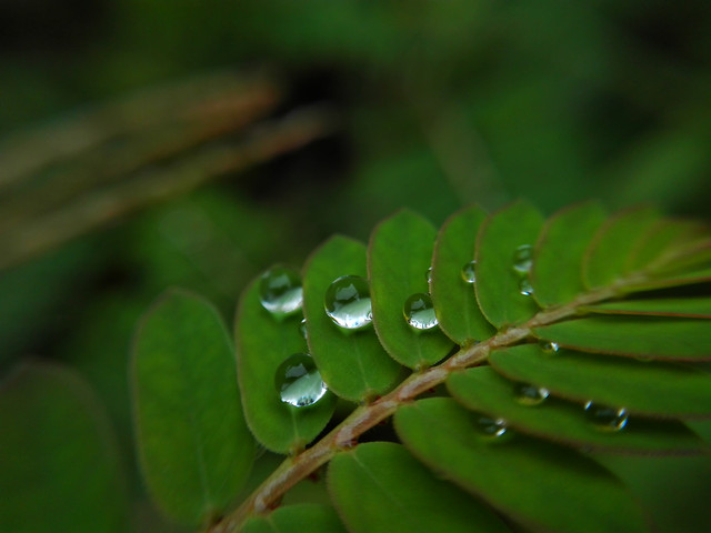 leaf-flora-rain-nature-drop picture material