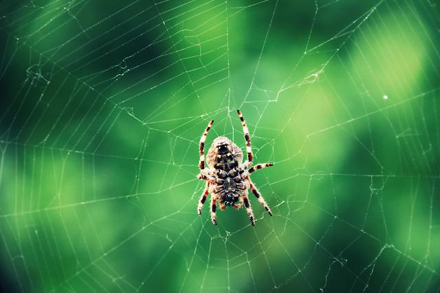 spider-spiderweb-arachnid-web-together-cobweb picture material