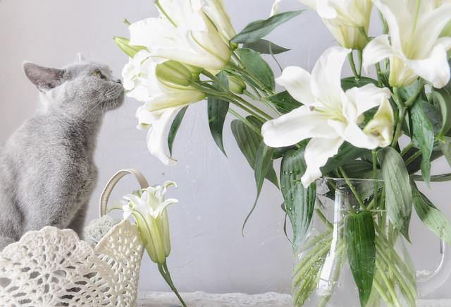 猫与花 picture material