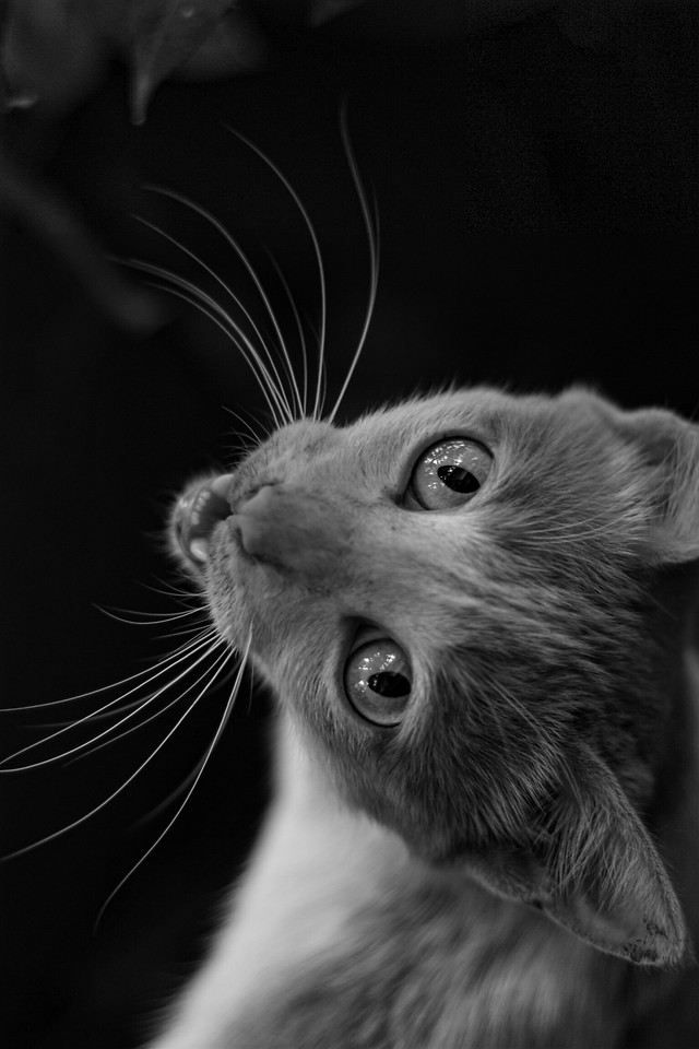 cat-portrait-whiskers-monochrome-cute 图片素材
