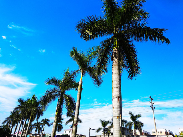 palm-beach-sky-vacation-tree picture material