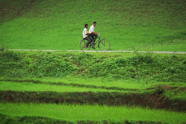 agriculture-field-farm-landscape-grass picture material