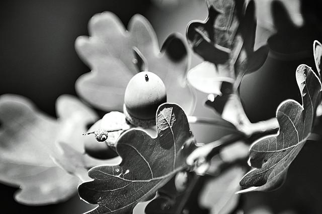 monochrome-white-black-black-and-white-monochrome-photography 图片素材