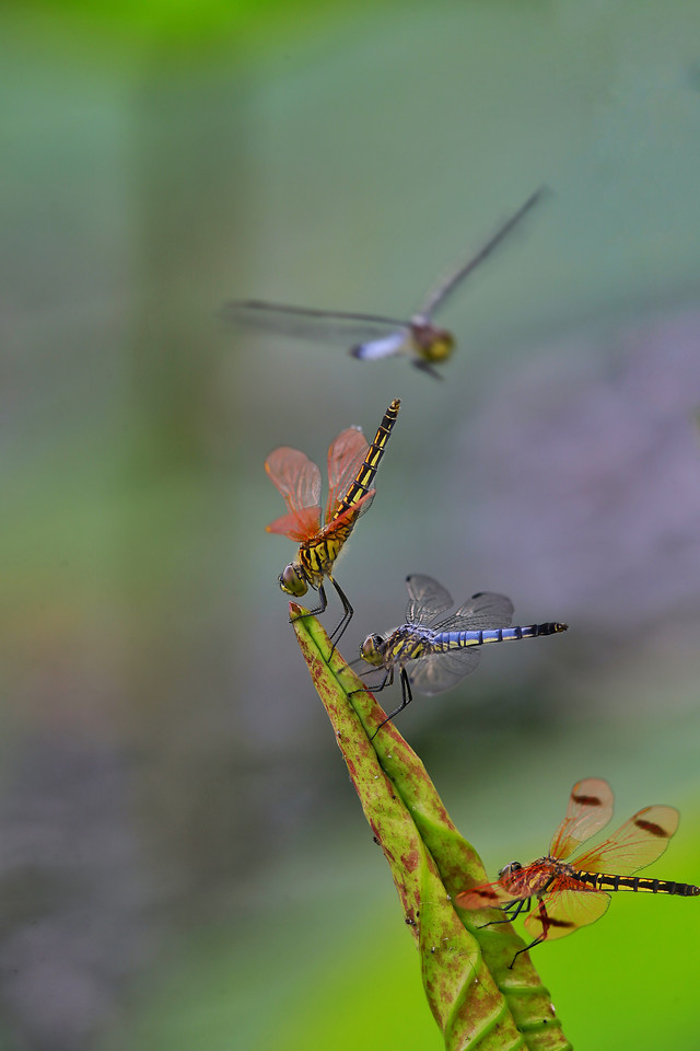 insect-dragonfly-no-person-wildlife-nature picture material
