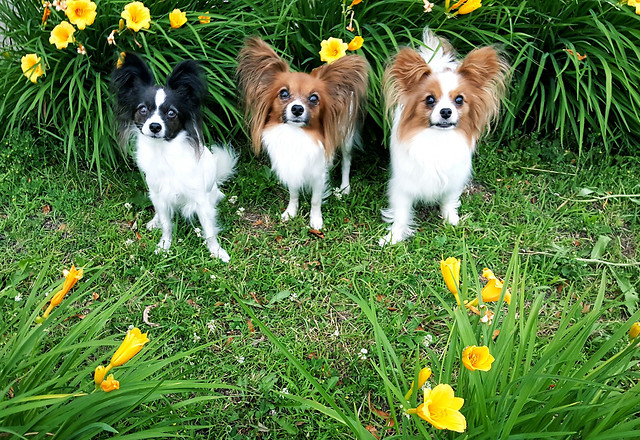 grass-cute-dog-little-pet picture material