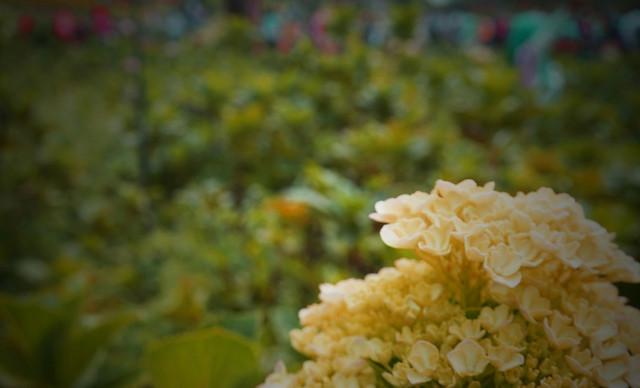 nature-flower-flora-garden-leaf picture material