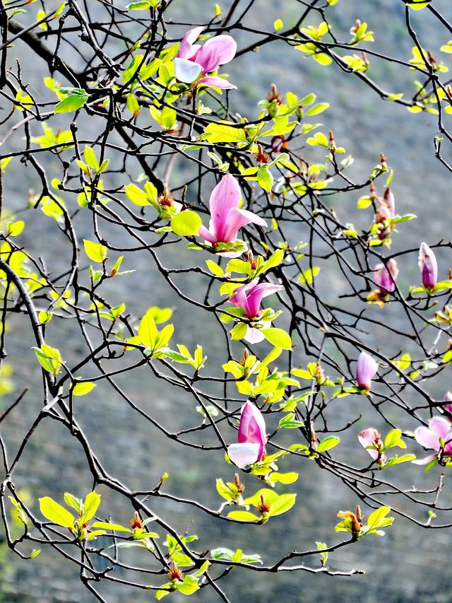 branch-tree-season-nature-flower 图片素材