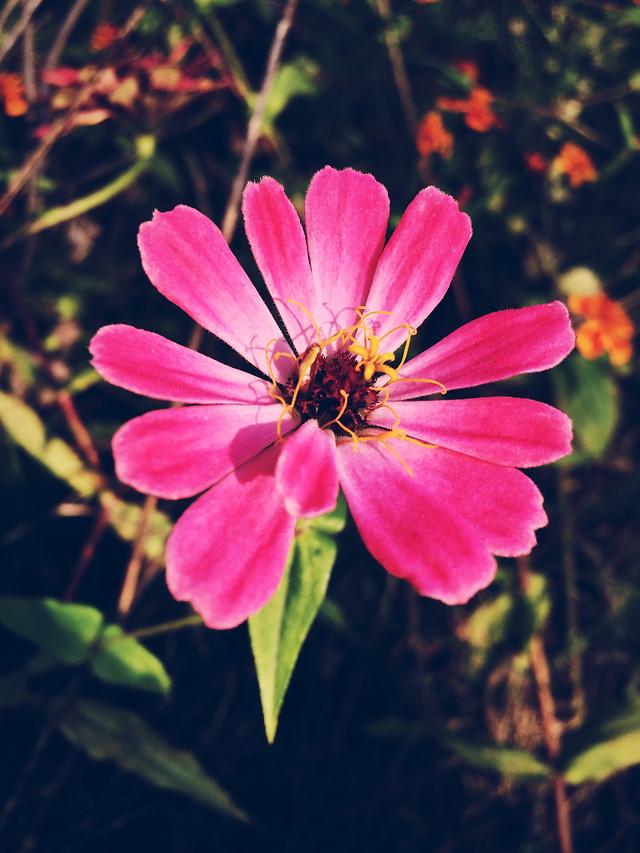 flower-nature-no-person-flora-petal picture material