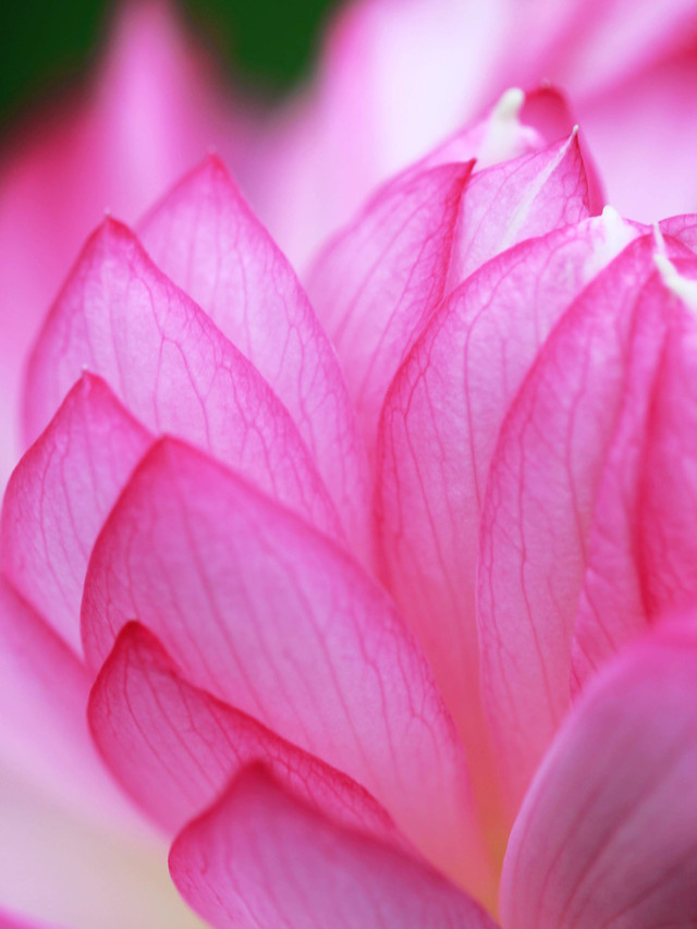 flower-flora-nature-garden-beautiful picture material