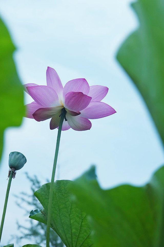 leaf-nature-flower-flora-plant 图片素材