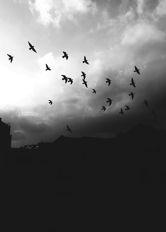 bird-flight-sky-monochrome-black-and-white 图片素材