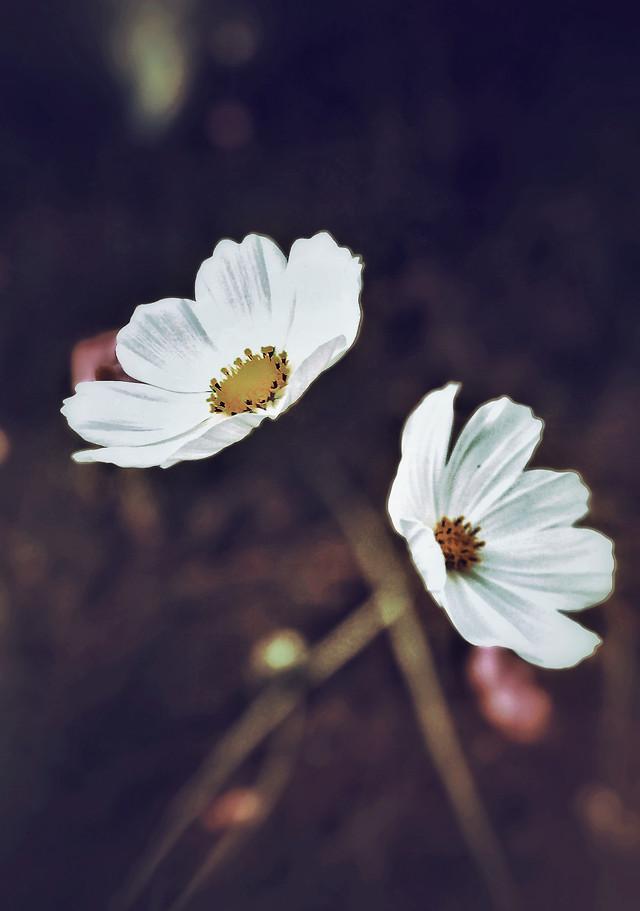 flower-flora-petal-flower-gesture-no-person picture material