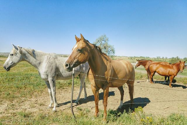 horse-pasture-mare-mane-livestock picture material