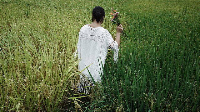 field-grass-crop-agriculture-nature picture material
