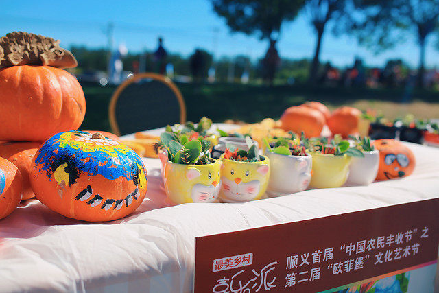 food-harvest-festival-pumpkin-outdoor-no-person 图片素材