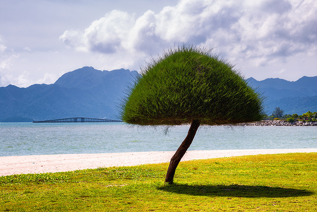 sky-tree-water-grass-sea picture material