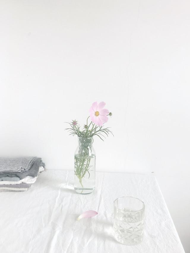 flower-vase-table-still-life-my-september picture material