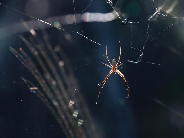 spider-invertebrate-arachnid-spiderweb-web picture material