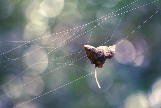 autumn-silk-language picture material