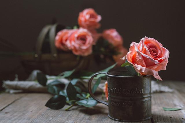 flower-rose-still-life-vase-dark-tone picture material