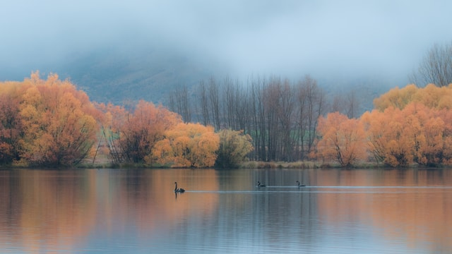 new-zealand-scenery picture material
