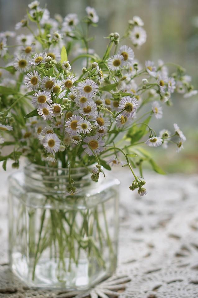 flower-herb-fresh-still-life-summer picture material