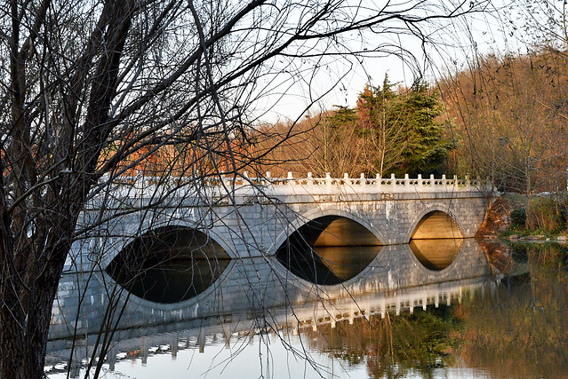 bridge-tree-water-reflection-landscape picture material