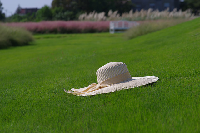 grass-field-grassland-lawn-straw-hat picture material