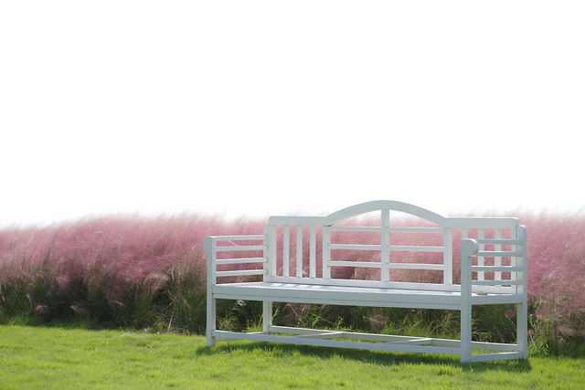 grass-bench-lawn-pink-nobody picture material
